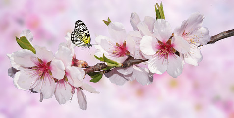 Butterfly and Tree Blossom