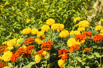 Beautiful flowers at Suan Luang. R.9, Thailand