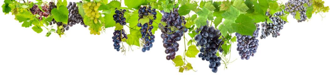 farandole de grappes de raisins sur fond blanc