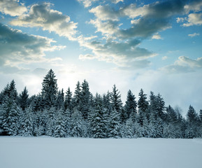 Snowy trees in winter landscape at sunset. National park Sumava in Czech Republic.