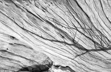 reflets de branche sur vieille souche