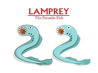 Lamprey , Parasite Fish in vector cartoon design