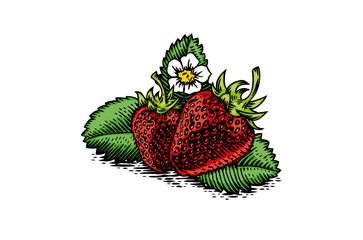 Two strawberries with leaves and flower