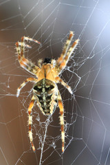 brown spider in the web