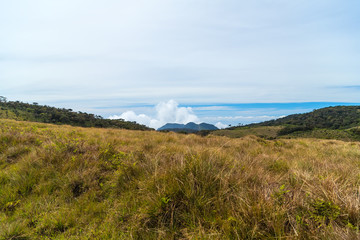 Central Highlands of Sri Lanka – landscape cloud forest of the Horton Plains National Park
