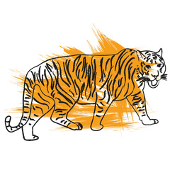 vector, isolated sketch of a tiger is coming