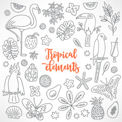 Set of hand drawn tropical elements