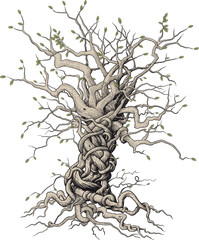 tree with beautifully randomly interlaced twigs and roots in Japanese style on a white background