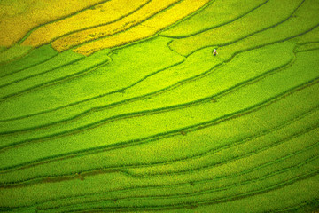 Beautiful view of rice paddy field during sunrise Nature composition