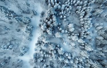 Winterwald Luftbild