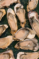 fresh raw oysters at a fish market