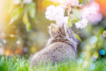 Osterkarte Babyhase Natur Wiese
