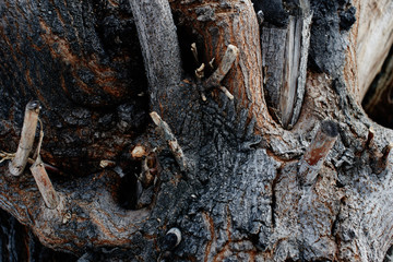 textured natural background. Close-up of bark, wood and twigs