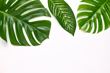 Creative Tropical Fresh Palm Leaves Set. Green Summer Design. Art Bright Summer Layout. Nature Beach leaves background. Minimal. Detail