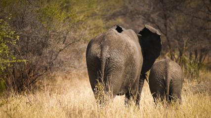 Elephant Herd in Tarangire National Park, Tanzania
