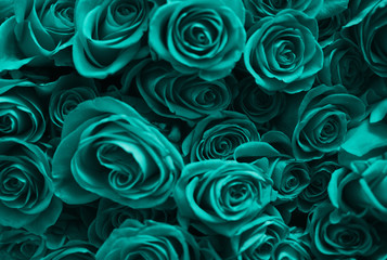 Background of a set of turquoise roses. Valentine's Day. Wall mural