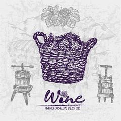 Digital color vector detailed line art grape