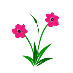 Illustration of wild pink flowers bouquet