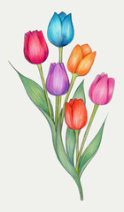 Tulips - Colorful drawing of tulips, made with colored pencils on archival polyester film.