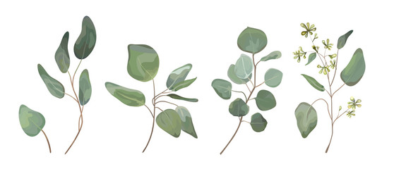 Eucalyptus seeded silver dollar tree leaves designer art, foliage, natural branches elements in watercolor rustic style set collection. Vector nature decorative various elegant illustration for design