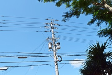Electric poles and green trees