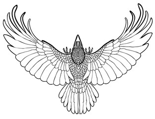 Vector illustration of flying raven black and white