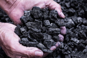 Coal mining : coal miner in the man hands of coal background. Picture idea about coal mining or energy source, environment protection. Industrial coals. Volcanic rock.