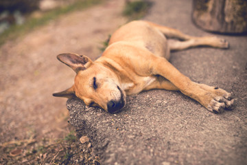 Puppy sleeping on the street. Imagination of dreams.