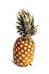 the harvest beautiful ripe tropical fruit pineapple