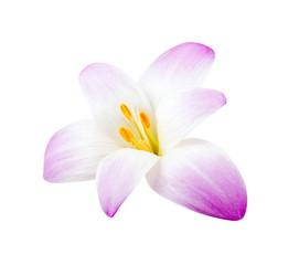 Elegance flower isolated on white background.