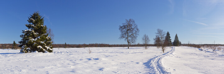 Fototapete - Hautes Fagnes in Belgium in winter on a clear day