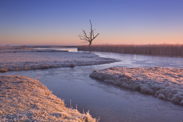 Wall Mural - Lonely tree in winter at sunrise in The Netherlands