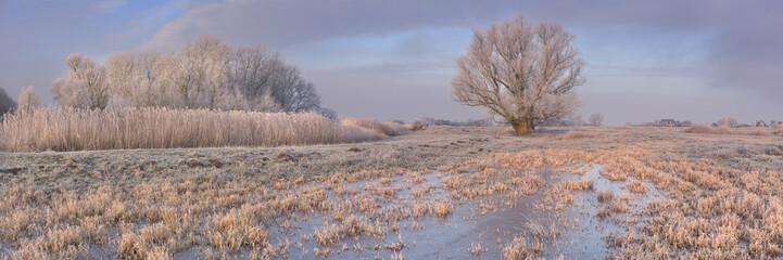 Fototapete - Frozen landscape in The Netherlands in early morning sunlight