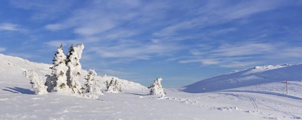 Wall Mural - Frozen trees in a snowy winter landscape in Trysil, Norway