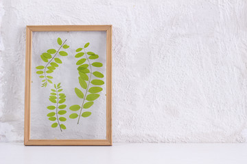 Pressed and framed leaves of locust in front of white wall