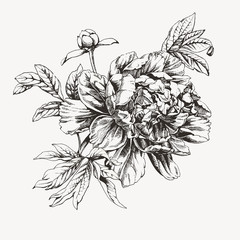 Vintage ink drawn peony flower