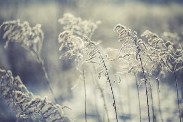 Frozen grasses in winter