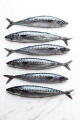 Six sardines on white background