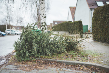 Germany, Brandenburg, christmas tree is disposed