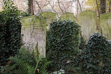 gravestones and ivy