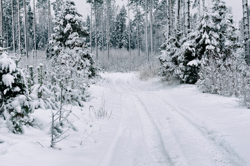 snow road in the forest in winter in Russia