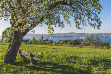 Germany, Dingelsdorf, Uberling Lake, bench and tree in spring