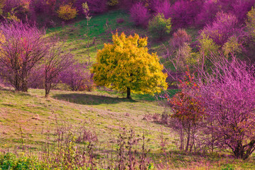 Vibrant colored trees at mountainside in late autumn. Beautiful, colorful nature background.
