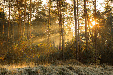 Wall Murals Forest Sun rays in the autumn morning frosty landscape in forest