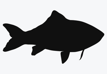 Black silhouette of river fish. Contour of the crucian carp. Logo. Tattoo.