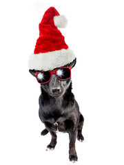Cute black dog wearing santa claus hat christmas isolated