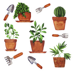 Set of home plants in pots and garden tools on white background. Hand drawn watercolor illustration.