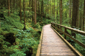 Wall Murals Road in forest Wooden pathway through green pine forest