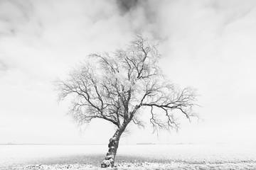 High contrast b&w photo of a tree in a foggy field in winter
