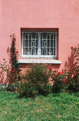 white window in the middle of a pink wall over rosebushes on  sunny day